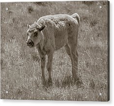 Acrylic Print featuring the photograph Baby Buffalo by Rebecca Margraf