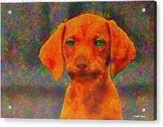 Baby Dog - Pa Acrylic Print by Leonardo Digenio