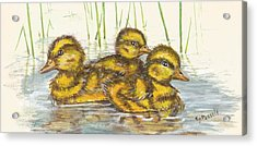 Baby Ducks For Ma Acrylic Print