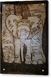 Baby Elephant Pyrographics On Paper Original By Pigatopia Acrylic Print by Shannon Ivins