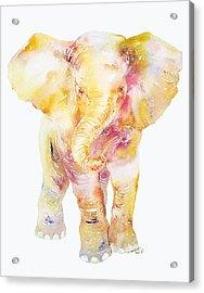 Baby Ellie Acrylic Print