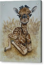 New Born Baby Giraffe Acrylic Print by Kelly Mills