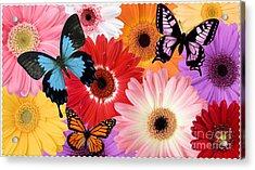 Summer's Desgn Acrylic Print