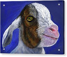 Baby Goat Acrylic Print by Angela Finney