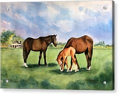 Baby Horse Acrylic Print