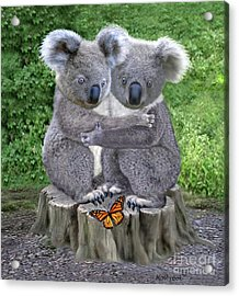 Baby Koala Huggies Acrylic Print by Glenn Holbrook
