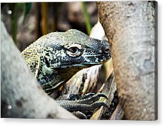 Acrylic Print featuring the photograph Baby Komodo Dragon by Scott Lyons