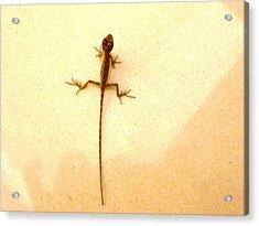 Baby Lizard Acrylic Print