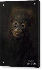 Baby Orangutan  One Acrylic Print