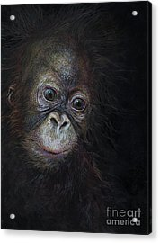 Baby Orangutan Three Acrylic Print