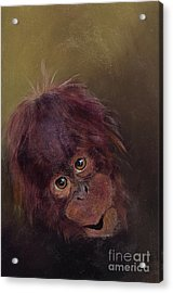 baby orangutan Two Acrylic Print