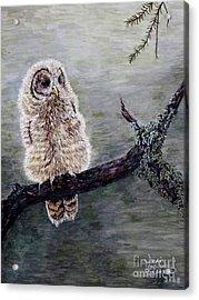 Baby Owl Acrylic Print by Judy Kirouac