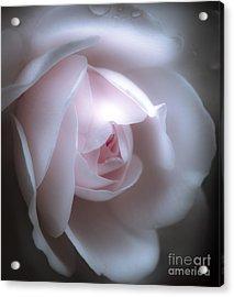 Baby Pink Rose Acrylic Print by Karen Lewis
