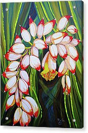 Baby Pink Shell Ginger Acrylic Print by Debbie Chamberlin