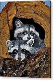 Baby Raccoons Acrylic Print by Dia Spriggs