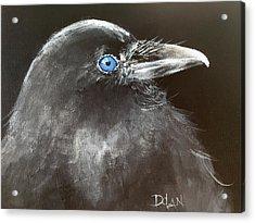 Baby Raven Acrylic Print