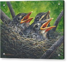 Acrylic Print featuring the painting Baby Robins by Kim Lockman