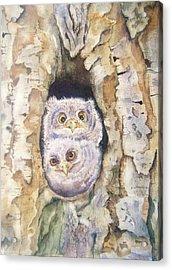 Baby Screech Owls Acrylic Print by Patricia Pushaw