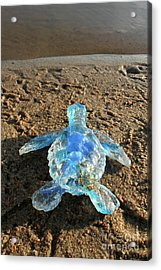 Baby Sea Turtle From The Feral Plastic Series By Adam Long Sculp Acrylic Print