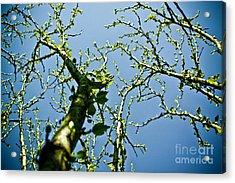 Baby Spring Tree Leaves 02 Acrylic Print by Ryan Kelly