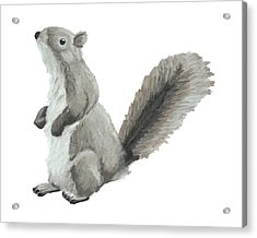 Baby Squirrel Acrylic Print