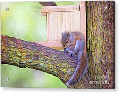 Baby Squirrel In The Tree Acrylic Print by Sharon McConnell