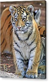 Baby Stripes Acrylic Print by Scott Mahon