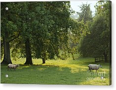Back From The Meadow Acrylic Print by Angel  Tarantella