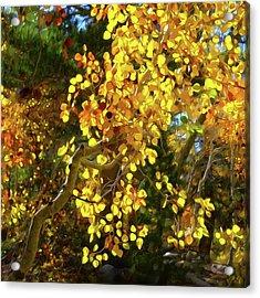 Back Lit Aspen Tree A Stylized Landscape By Frank Lee Hawkins Acrylic Print