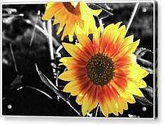 Back-lit Brilliance Acrylic Print
