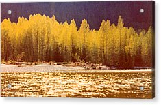 Back Lit Trees By The River Ae 2  Acrylic Print by Lyle Crump