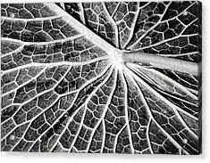 Back Of A Water Lily Pad Acrylic Print