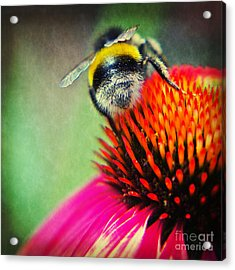 Back Side - Bumble Bee Acrylic Print by Angela Doelling AD DESIGN Photo and PhotoArt