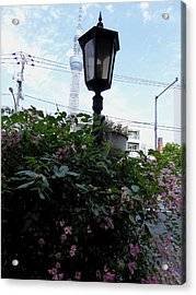 Back Street In Tokyo Acrylic Print