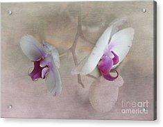 Back To Back Acrylic Print by Judy Hall-Folde