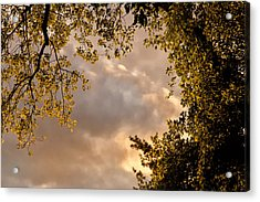 Back Yard Clouds Acrylic Print by Ross Powell