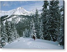 Backcountry Skiing Into An Evergreen Acrylic Print by Tim Laman