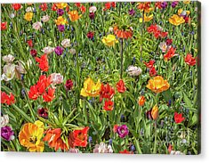 Background Of Colorful Flowers Acrylic Print by Patricia Hofmeester