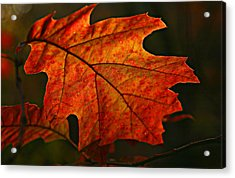 Acrylic Print featuring the photograph Backlit Leaf by Shari Jardina