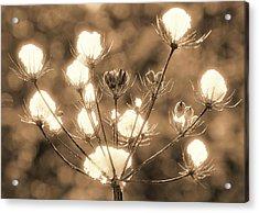 Backlit Magic Acrylic Print by Mark Denham