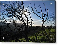 Acrylic Print featuring the photograph Backlit Trees Overlooking Hillside by Matt Harang