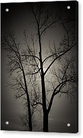 Backlit Trees Acrylic Print