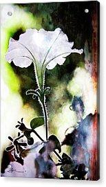 Backlit White Flower Acrylic Print
