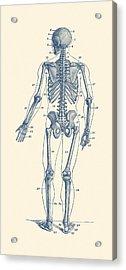 Backward Facing Skeletal Diagram - Vintage Anatomy Print Acrylic Print