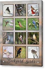Acrylic Print featuring the photograph Backyard Birds by Lori Deiter