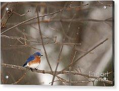 Backyard Blue Acrylic Print