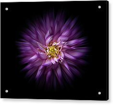 Acrylic Print featuring the photograph Backyard Flowers 20 Color Flow Version by Brian Carson