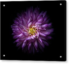 Acrylic Print featuring the photograph Backyard Flowers 20 Color Version by Brian Carson