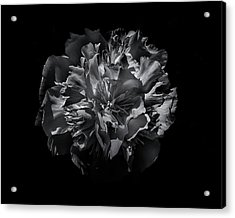 Acrylic Print featuring the photograph Backyard Flowers In Black And White 25 by Brian Carson