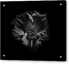 Acrylic Print featuring the photograph Backyard Flowers In Black And White 26 by Brian Carson